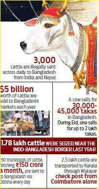 cattle smuggle