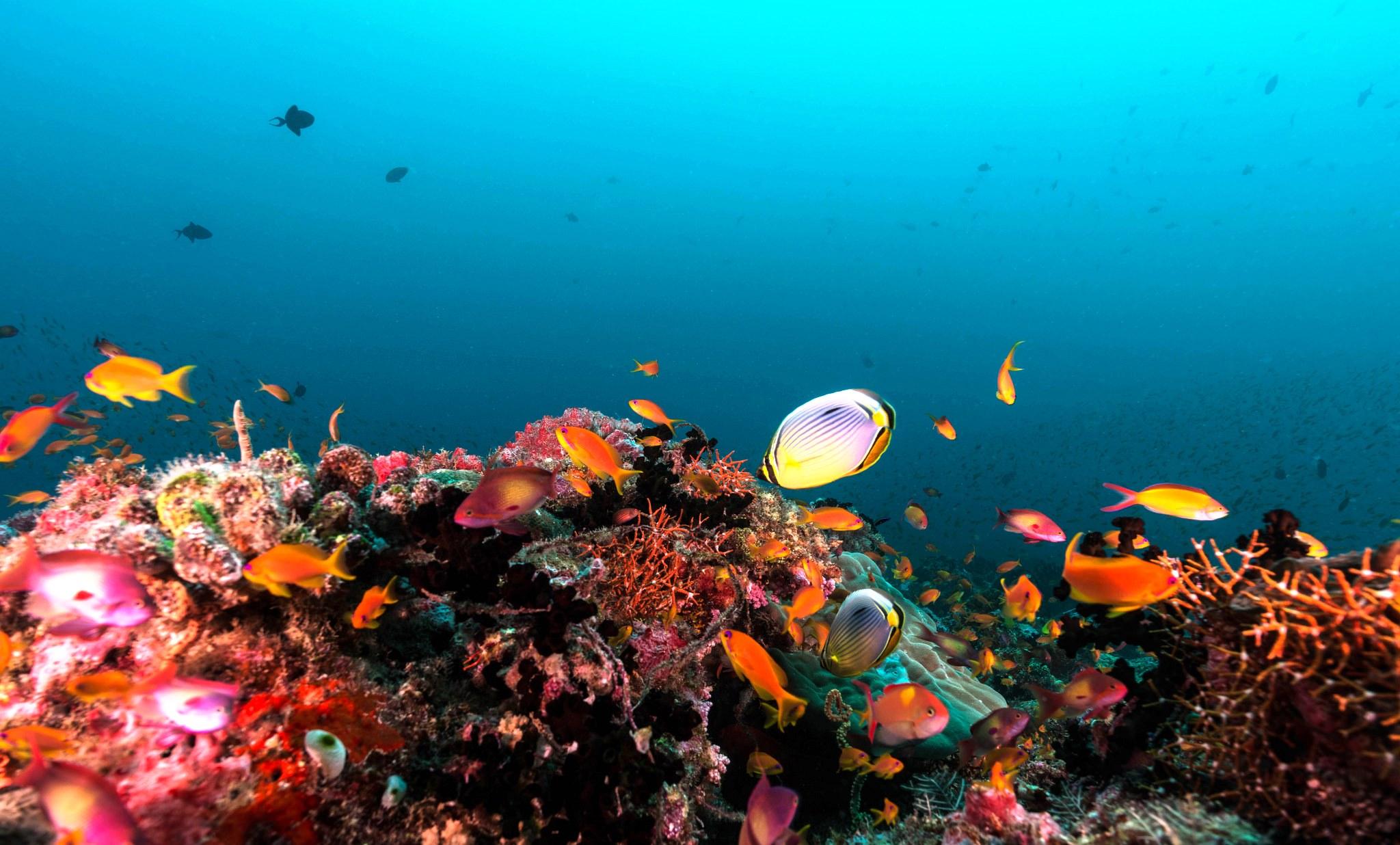 maldives-marine-life-hamaraakhbar